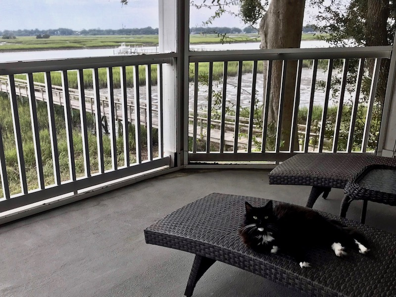 TrustedHousesitters in Folly Beach