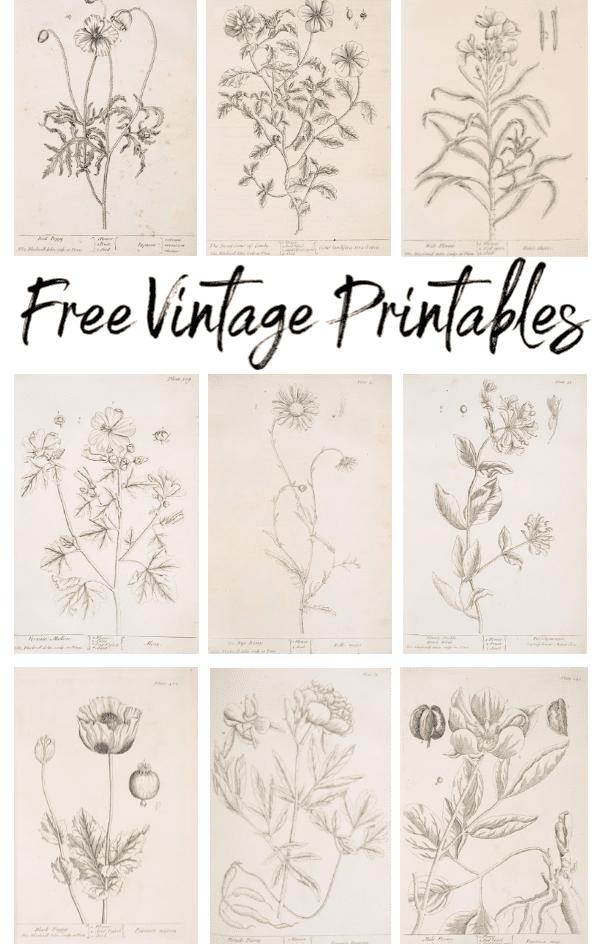 Botanical Vintage Printables - Welcome Home Sunday