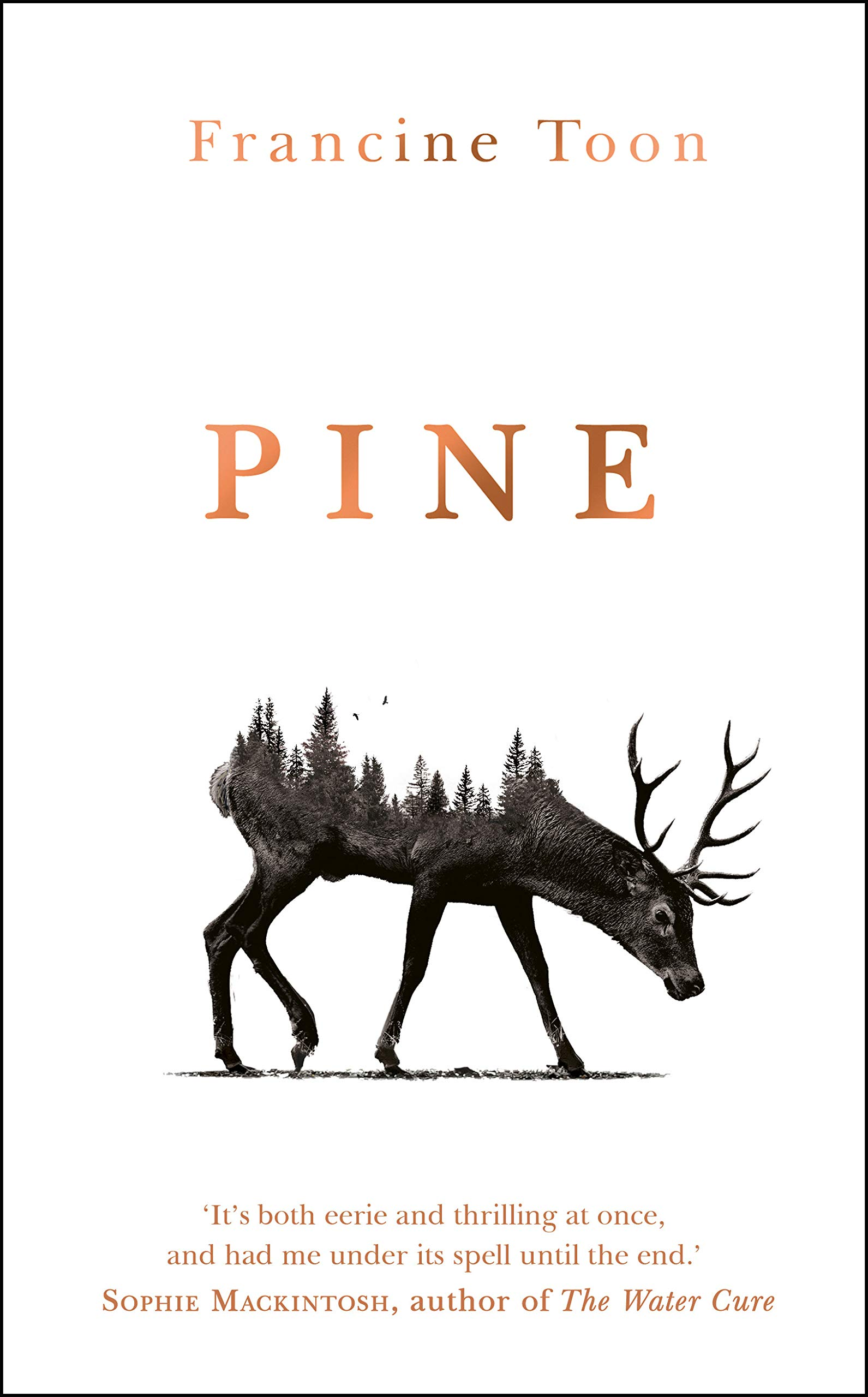 Pine by Francine Toon