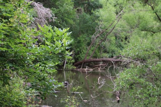 Beuscher State Park water