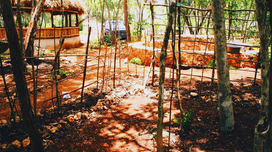 What you see in for picture is the Lemurian pathways with bean vines, utilizing every space available and closer to the Central matrix, basic principle of permaculture zoning. Left background is the new meditation hall palapa, about to be soon completed, mosquito meshing on the outer central circular windows and last a concrete polish floor.