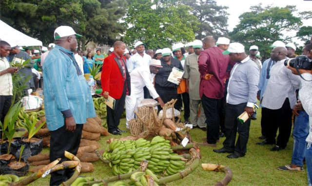 Farm produce displayed during the World Food Day  celebration in Port Harcourt, recently.