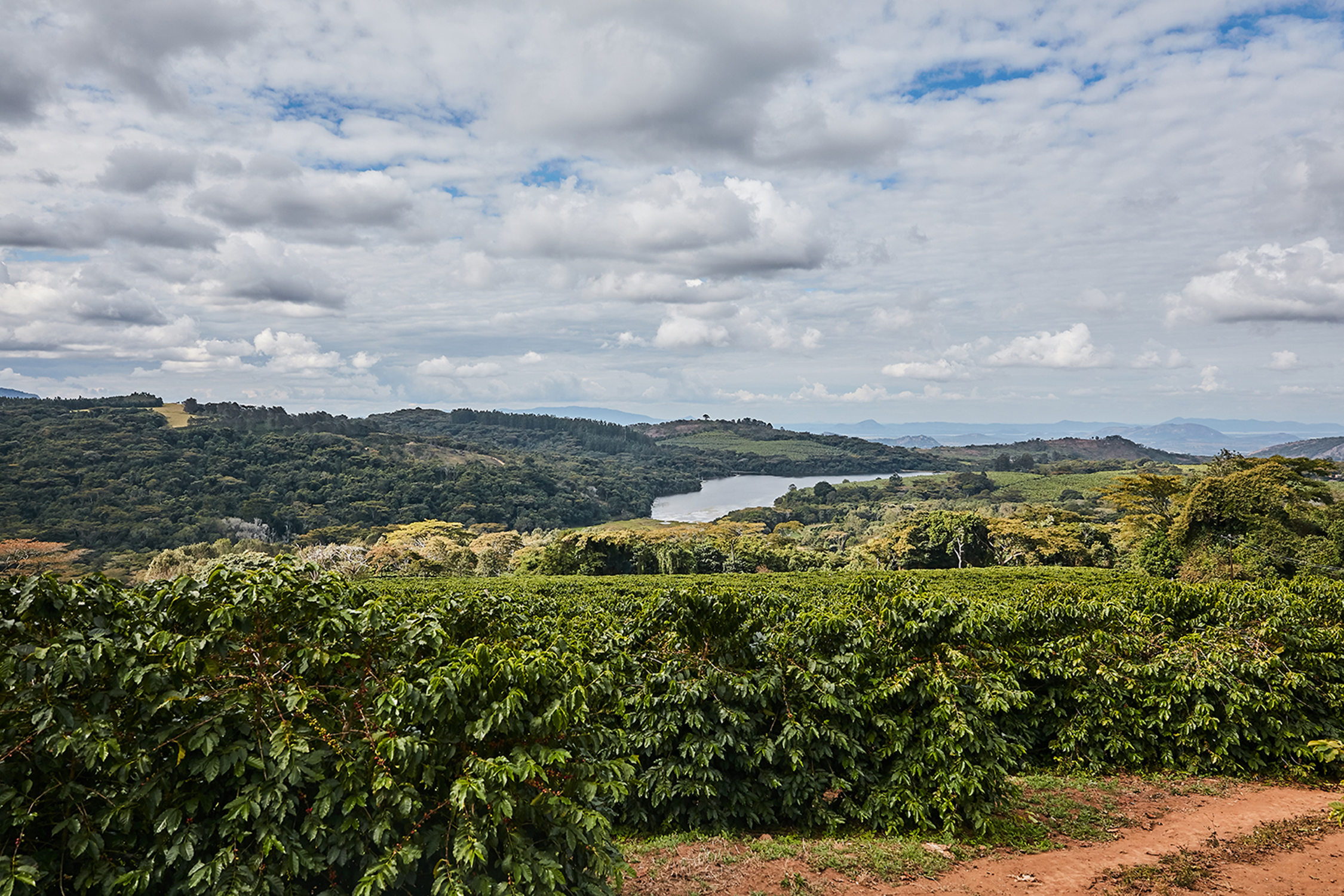 A coffee farm in the Honde Valley, eastern Zimbabwe