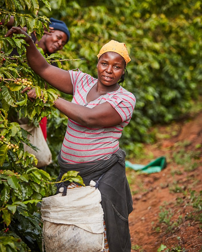 Almost half the Honde Valley growers are women