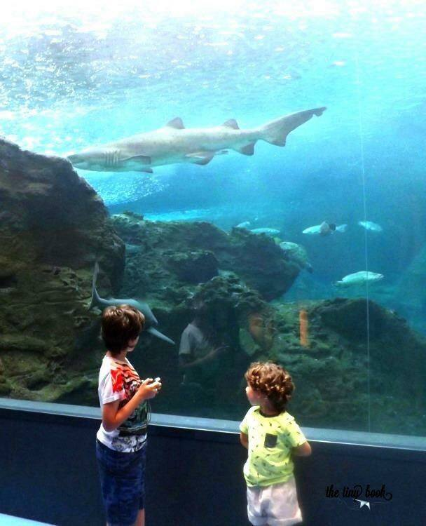 Sharks swimming in the aquarium of Crete. What to do in Heraklion with children.