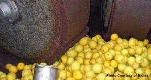 Extra virgin olive oil with lemon aromas, Biolea