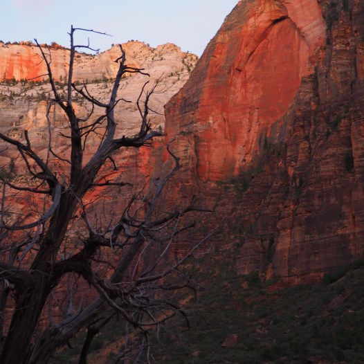 View from Heaps Canyon trail, Zion National Park, Utah