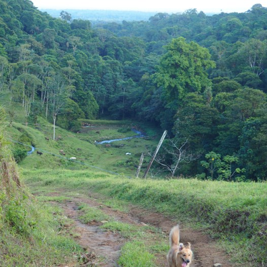 Chapo on the move while hiking towards the nearby waterfall