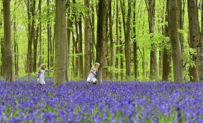 Κήπος με λουλούδια bluebelle στην Βρετανία