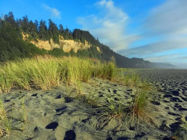 Gold Bluff Beach - best camping california