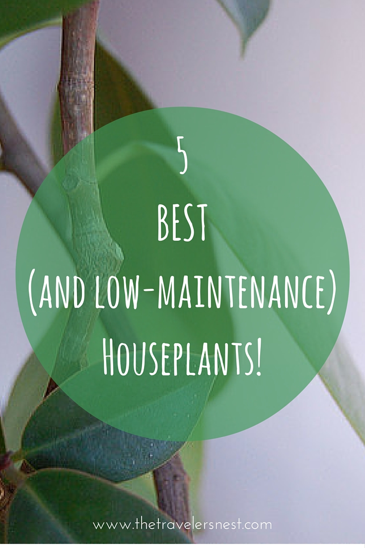 5 of the BEST House Plants