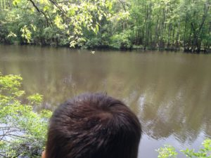 A lake at Congaree National Park