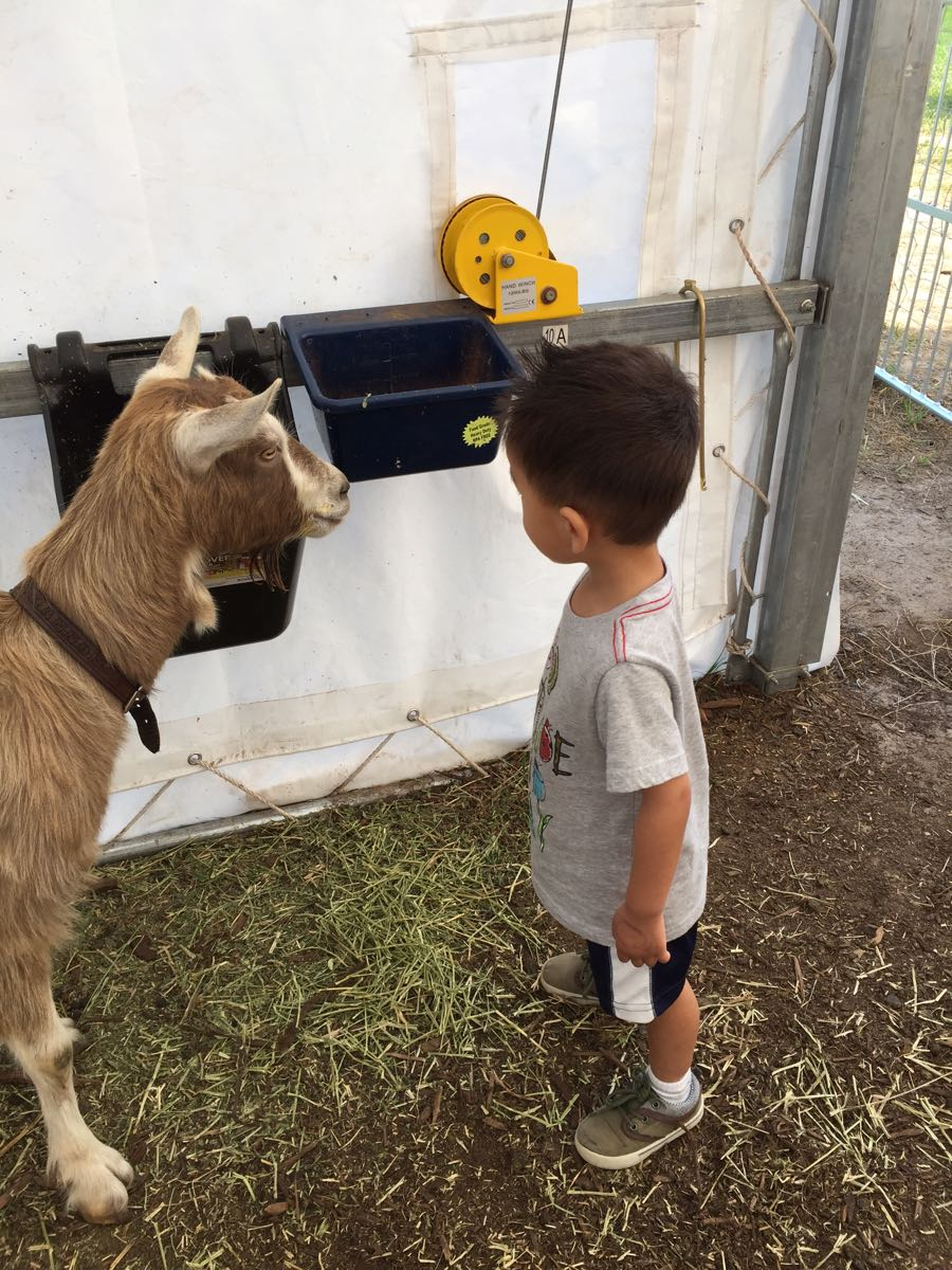 Tyler and Goats at Carl Sandburg Home