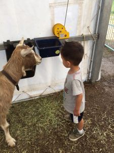 Tyler meeting a goat at Carl Sandburg Home
