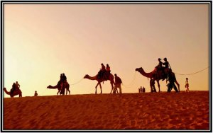 Thar Dessert Camel Ride