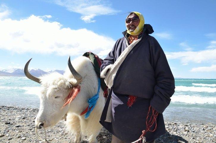 Nomadic man on Tibetan Steppe with yak