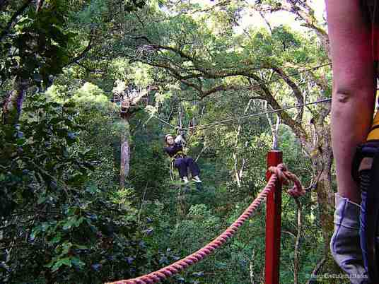Canopy Tree Top Tsitsikamma