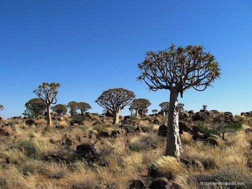 Quiver Tree Forest Keetmanshoop Namibia | Photos Namibia | Visit Namibia | Namibia Photos