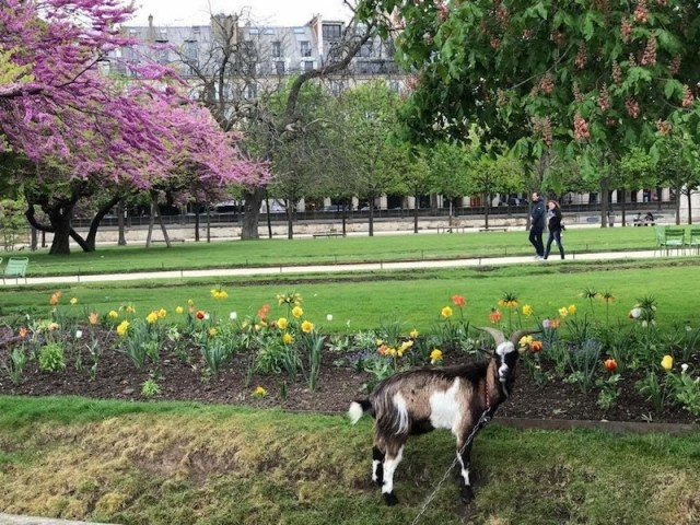 Tuileries Gardens