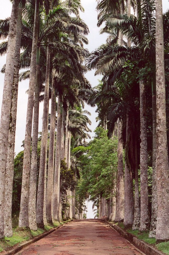 Things to do in Ghana - visit Aburi Botanical Gardens