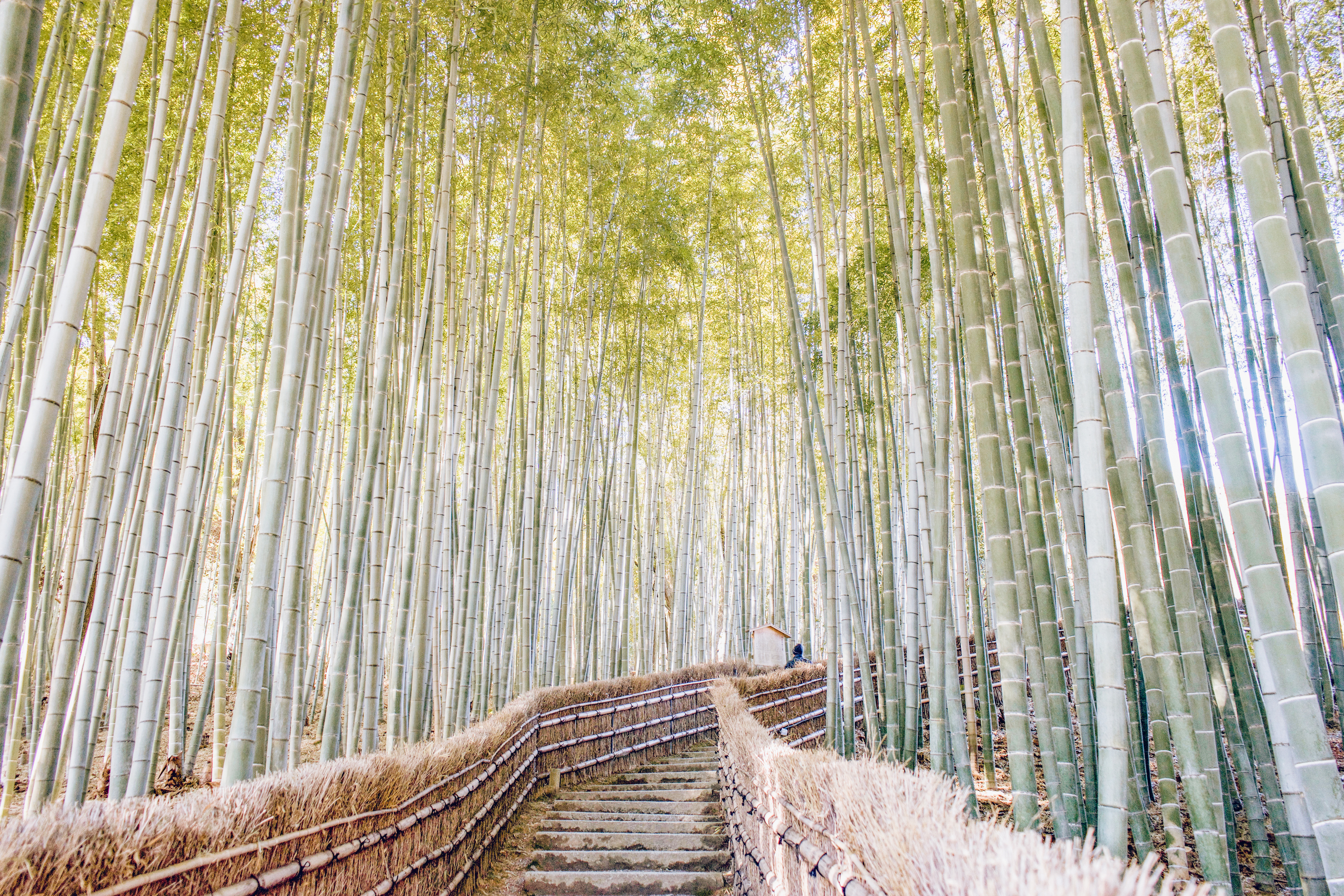 Kyoto Travel Guide: Three Days In Japan's Cultural Capital