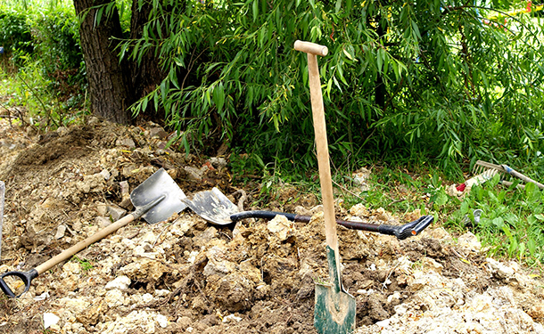 Digging on or through the root plate can severely daamage roots needed for your tree to survive