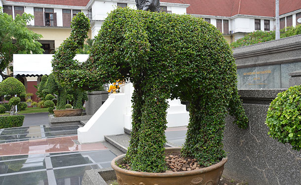 Eugenia topiary can be shaped into geometric forms and animals