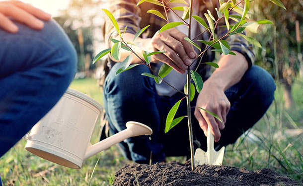 Planting a tree in the right place with good conditions