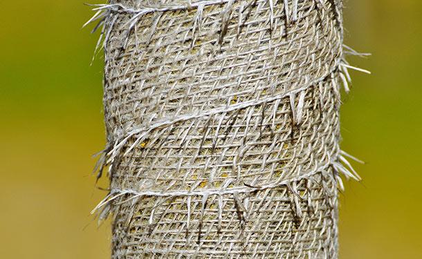Winter deciduous tree burlap trunk wrap