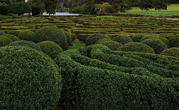 Evergreens for usda hardiness zone 9 privet shrubs