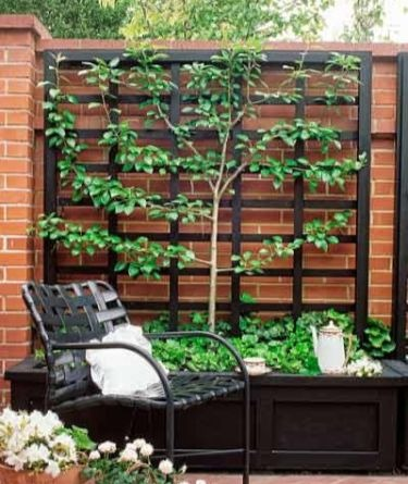 growing trees and shrubs on walls the