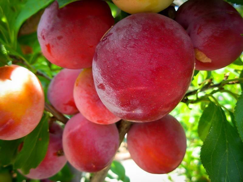 Fresh Shopping Fruit Online
