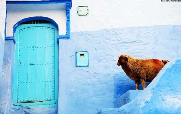 blue-streets-of-chefchaouen-morocco-8
