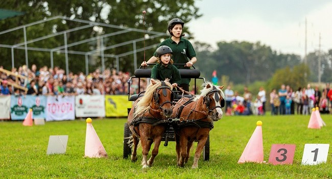 Poneii vor face spectacol, la Karpatia Pony Show 2017