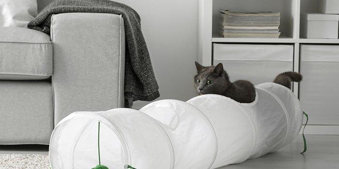 Top 7 destinații pentru iubitorii de pisici