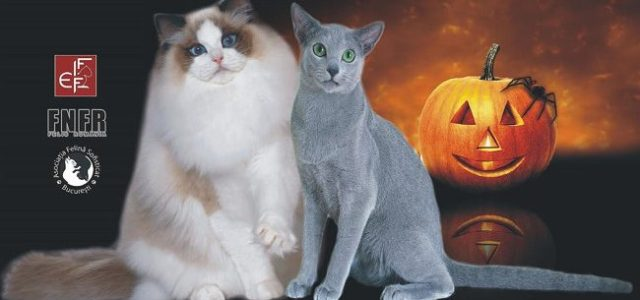 SofistiCAT, expoziție de pisici laRomexpo