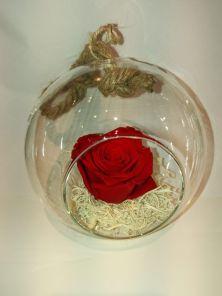 arkka trandafir criogenat