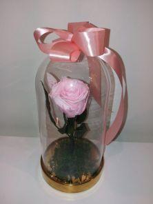 arkka trandafir criogenat2