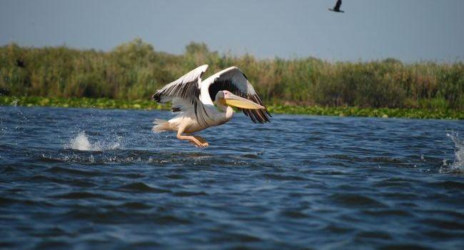 WWF și Google pun Delta Dunării pe harta digitală a lumii