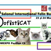 Peste 200 de pisici din toate colțurile lumii vor putea fi admirate la SofistiCAT