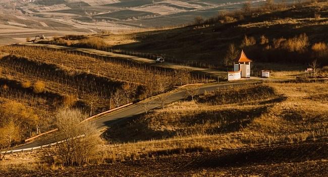 Crama Villa Vinèa, afaceri de peste 3 milioane de lei în 2019