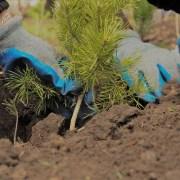 """OMV Petrom a finalizat prima etapă de plantare din acest an, în cadrul proiectului """"România plantează pentru mâine"""""""
