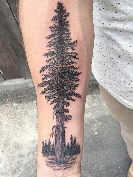 Redwood Tree Tattoo