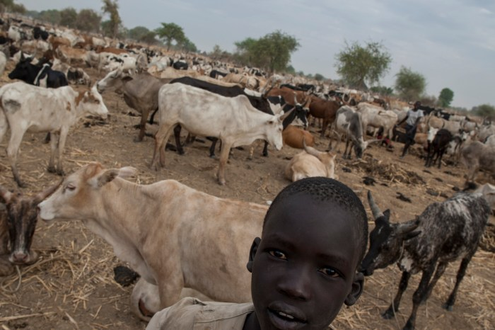 A South Sudanese boy pictured at a cattle ranch in Warrap State