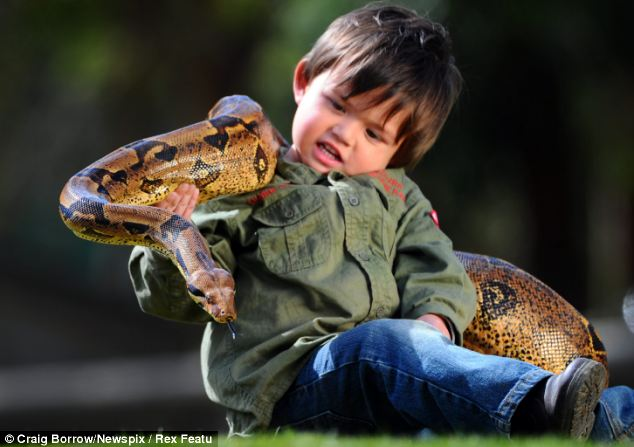 Natural: Charlie's proud dad said the toddler's obsession with snakes and lizards must be genetic