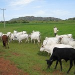 Fulani herdsmen, Cattle colony
