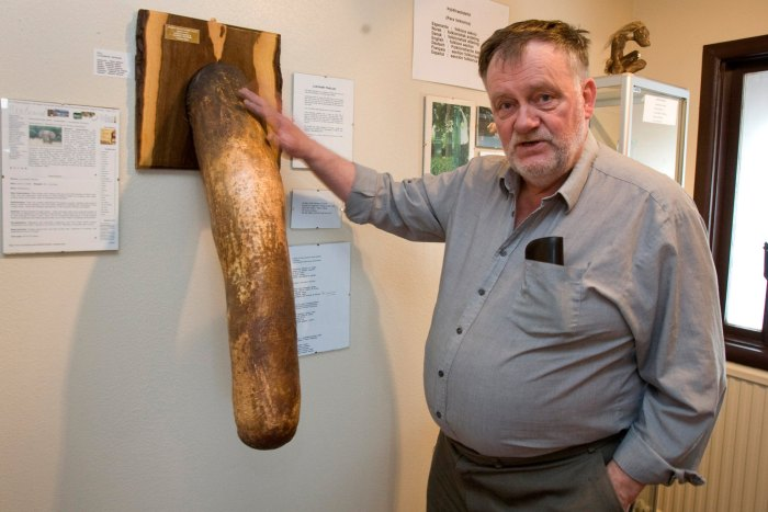 "Icelander Sigurður ""Siggi"" Hjartarson, the founder of the world's only phallological—yes, penis—museum"