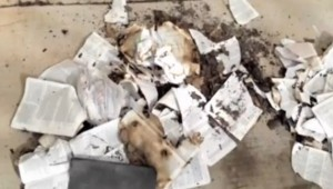 Suspected-Satanist-burns-Bibles-in-front-of-churches-in-Mesa-Arizona [Photo Credit: allchristiannews.com]