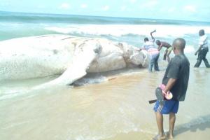 The strange fish on the shore of Eleko beach. (Photo Credit: Naij.com)