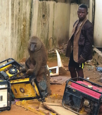 Nafiu Mohammed and one of the monkeys with which he attacked and dispossessed people of their goods and valuables in Lagos state. (Photo Credit: Punch)
